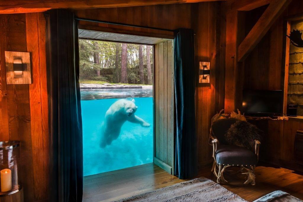 Un ours blanc regarde à travers la cloison vitrée