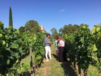 Personnes en train de visiter une vigne à St Emilion
