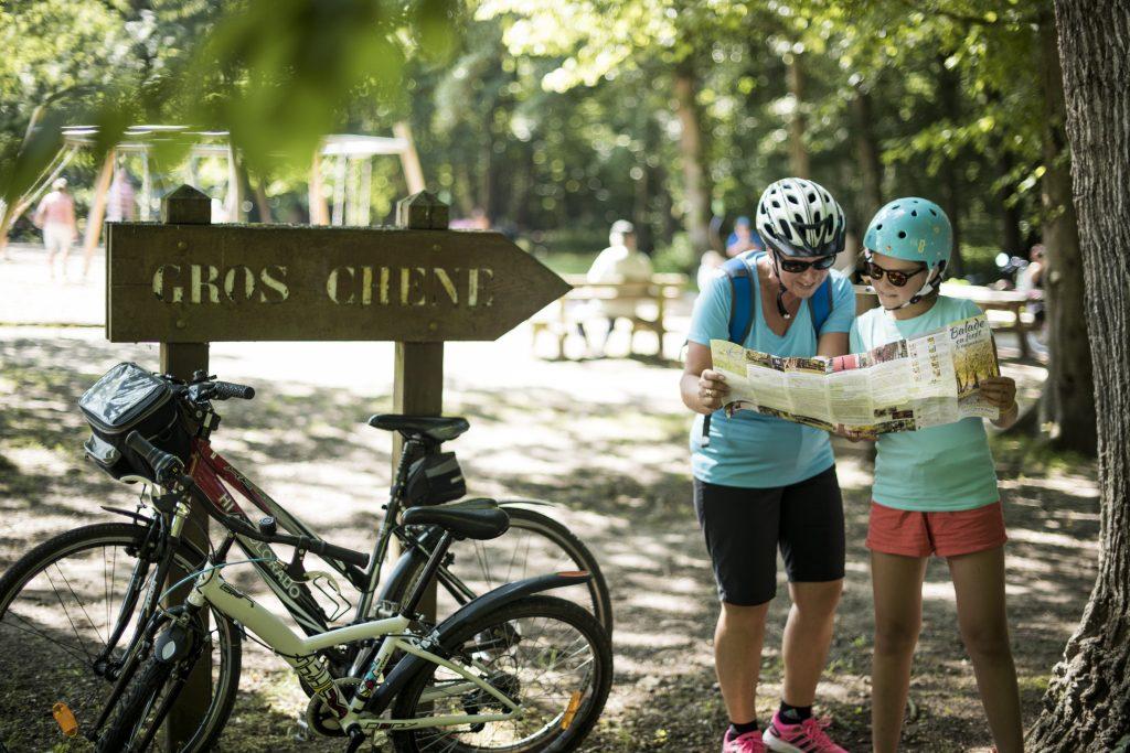 Randonnée à vélo dans la forêt de Haguenau